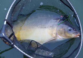 12 2 vissen 2017 08 14 karper 70cm 6kg