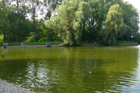 Viswedstrijd-3 2018 06 09