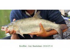 001 2018 05 14 Joey Beeckelaers