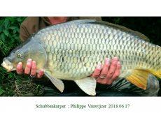 004 2018 06 17 Philippe Vanwijzer