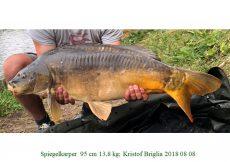 018 2018 08 08 Kristof Briglia 13.8 kg