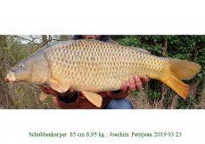 001 2019 03 23 Joachim Petitjean 85cm 8,95kg c
