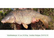 002 2019 03 30 Joachim Petitjean 81cm 10,28kg c
