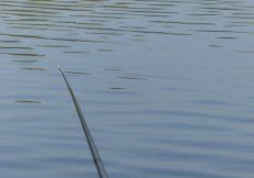 01 2 vissen 2015 10 30 vaste stok