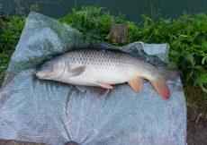 10 2 vissen 2017 07 27 karper 70cm 4.9kg