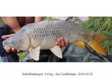 005 2018 06 22 Jan Lindebrings
